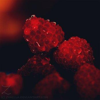 Precious_Berries_by_zvaella