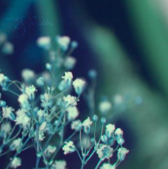 __o_c_e_a_n___by_mistandsparkles