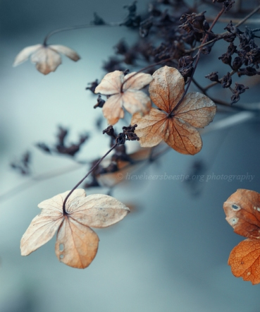 blue_autumn_by_lieveheersbeestje