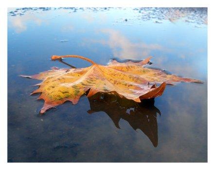 Leaf_by_Nlr4