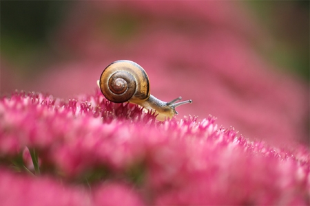 in_pink_by_lieveheersbeestje