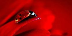 rojo250x125
