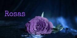 rosas250x125