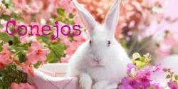 Conejos250x125