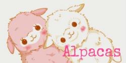 alpacas250x125