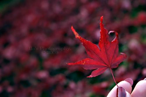 Dark_red_by_LaZiaIla
