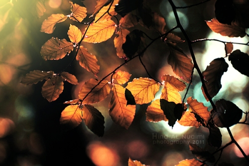 Fall leaves by_light_from_Emirates