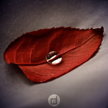 Finesse by `dandelgrosso